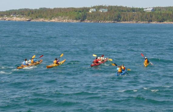 Baleines en kayak