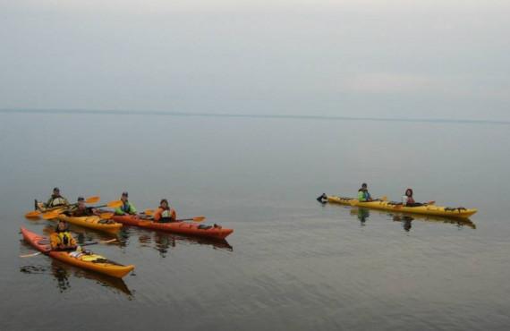 Excursion en kayak près de Tadoussac pour observer les baleines