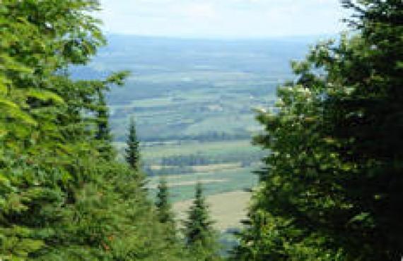 Région du Mont-Comi