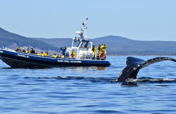 Observation des baleines à Forillon