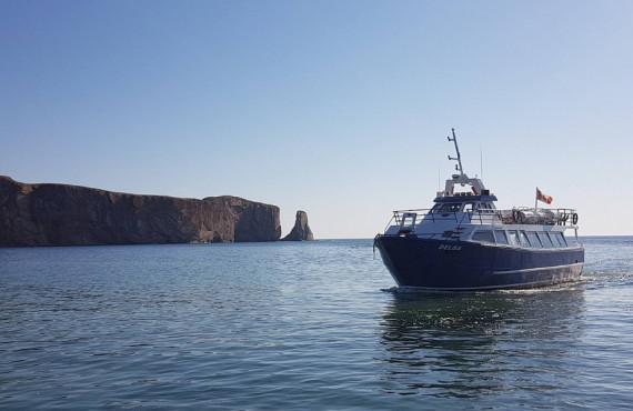 Observation des baleines à Percé