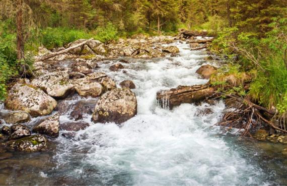 Petit ruisseau sur le sentier les Cascades au parc national de la Jacques-Cartier