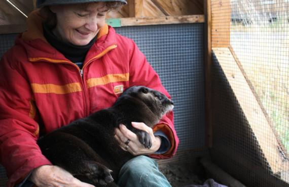 Refuge pour animaux au Québec