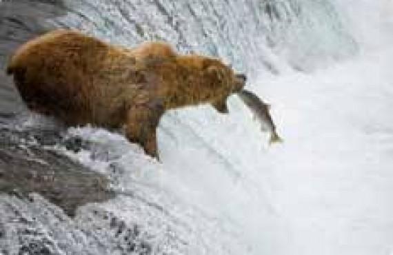Safari d'observation aux grizzlys