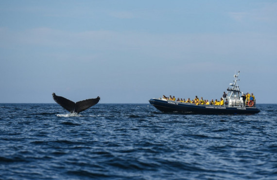 Croisière aux baleines en Gaspésie