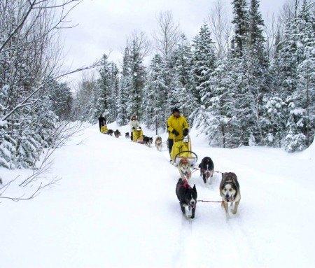 Jour 1: Traîneau à chiens - 25 km