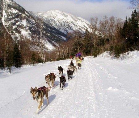Jour 3 :  Traîneau à chiens - 35 km