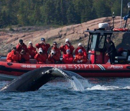 Whale watching by zodiac, Tadoussac