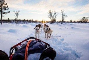 Initiation en traîneau à chiens