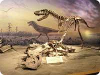 Musée du dinosaure Tyrrell