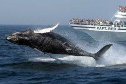 Safari aux baleines - Boston