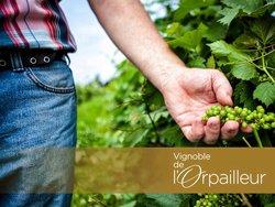 Visite d'un vignoble - Dunham, Québec