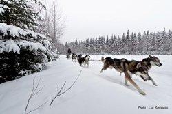 Excursion en traîneau à chiens - Duchesnay