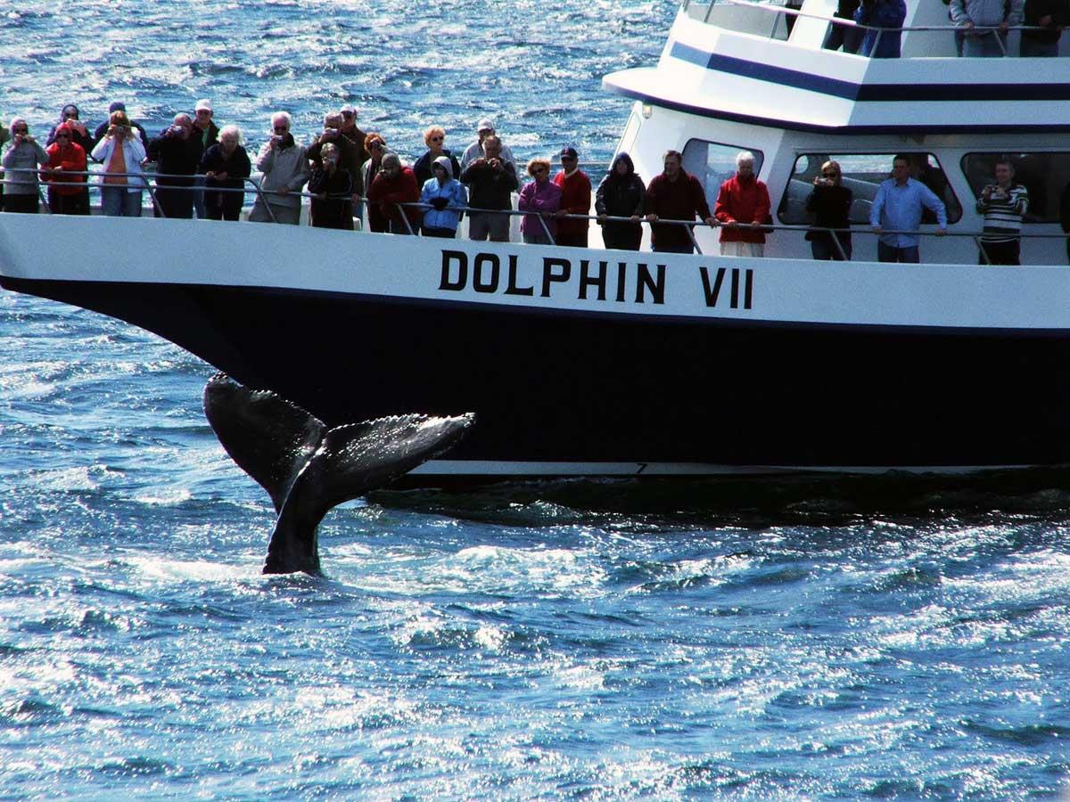 3-observation-baleine-boston-safari.jpg
