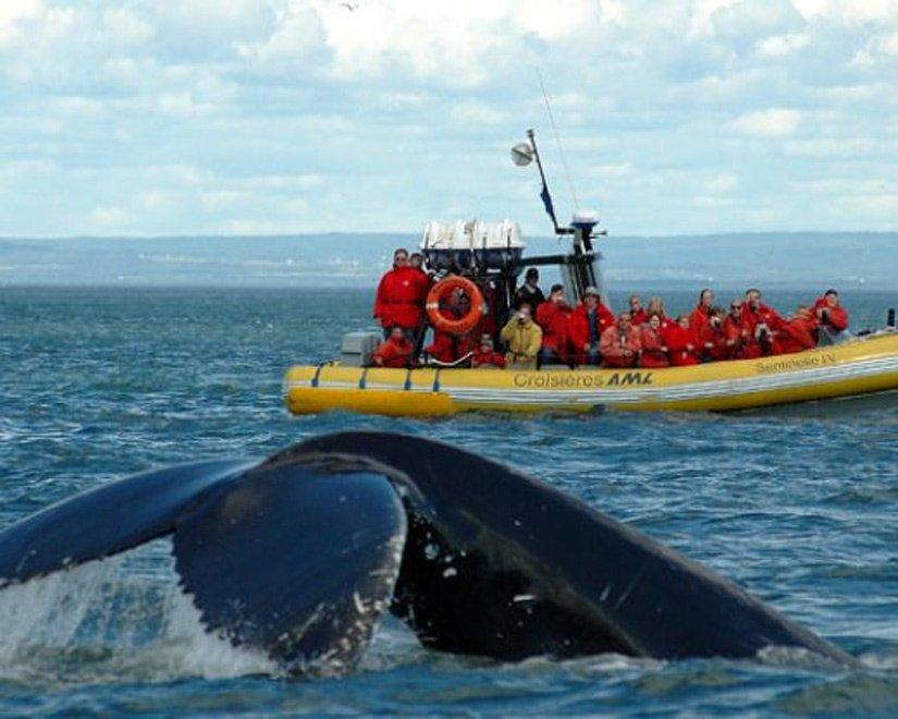 Safari au baleines en zodiac