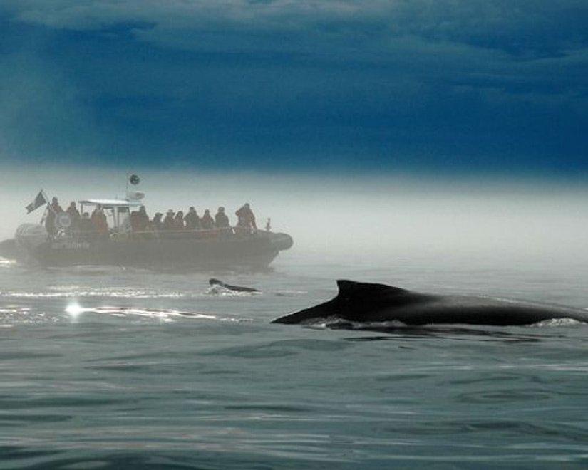 Safari aux baleines - Tadoussac