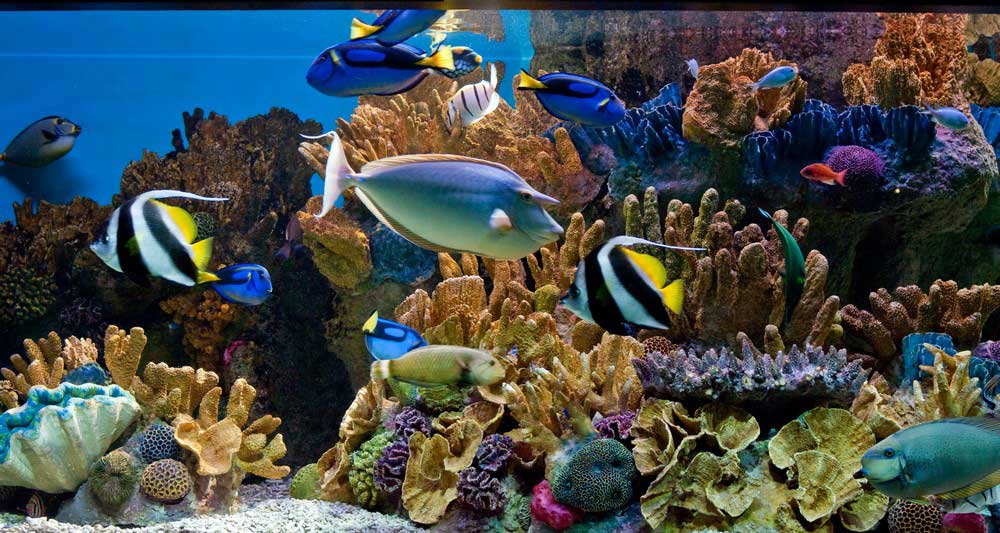 6-new-england-aquarium-boston.jpg