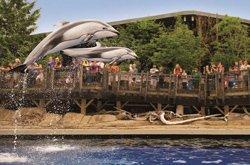 Aquarium Vancouver - Dauphins