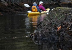 Kayak de mer - Quadra Island