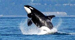 Safari aux orques - Port Hardy