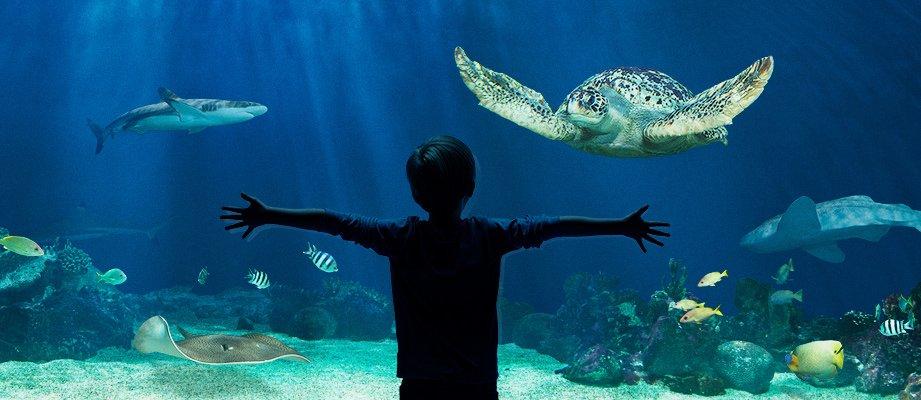 1-aquarium-vancouver.jpg