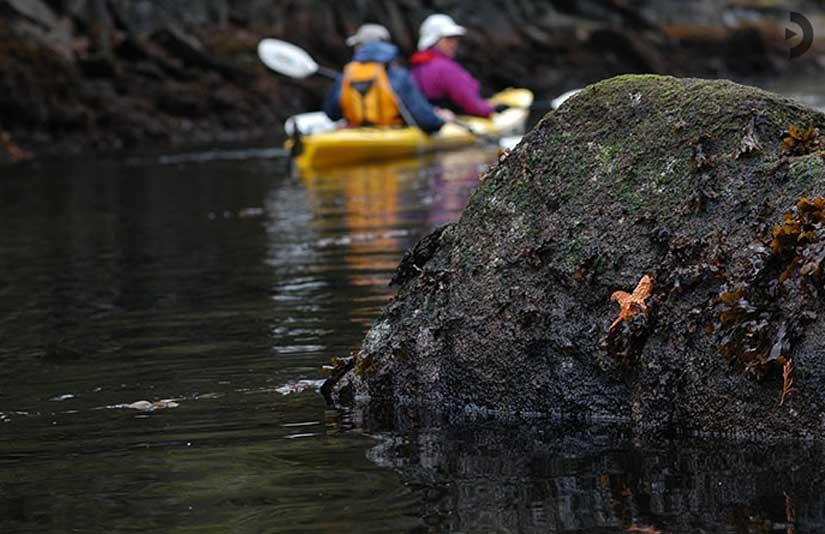 1-kayak-quadra-island.jpg