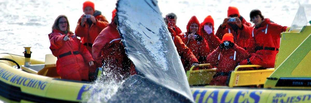 1-observation-baleine-orques-victoria-vancouver-zodiac.jpg