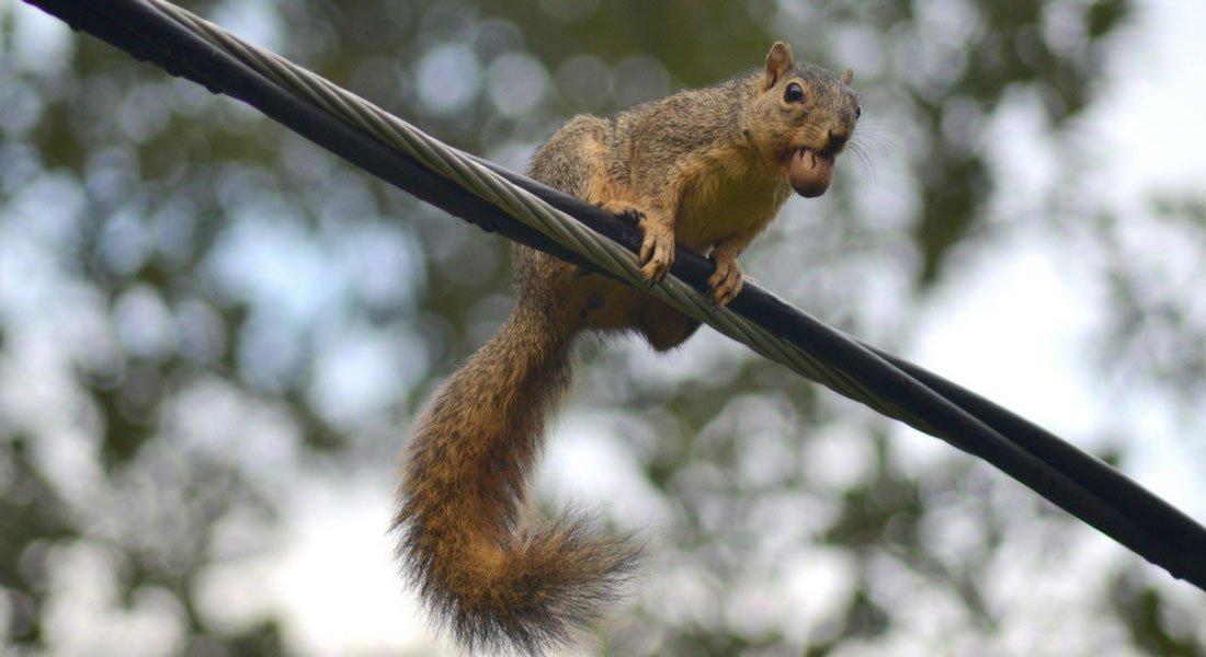 Écureuil au parc du Mont-Royal