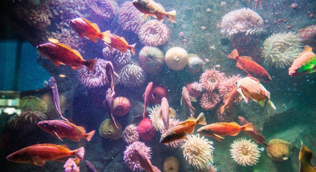 Aquarium de Vancouver prix