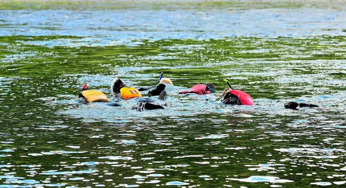 Nager avec les saumons au Québec