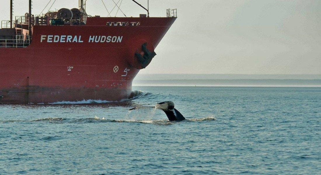 Observation des baleines au Québec