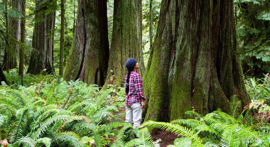 Cathedral Grove île de Vancouver