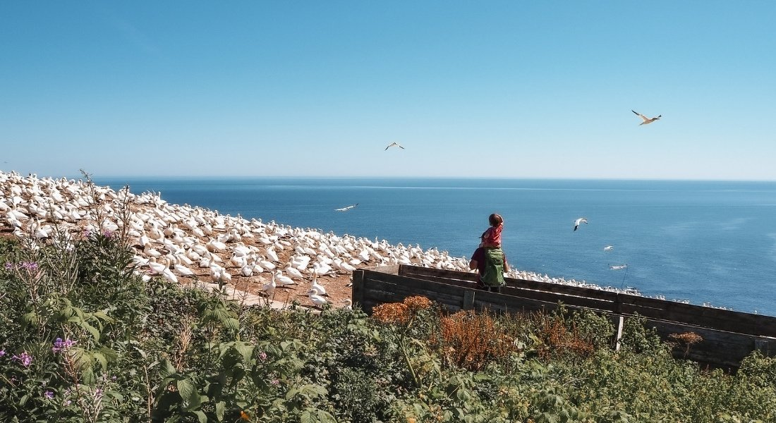 Touriste avec son enfant sur les épaules observant les oiseaux depuis un belvédère