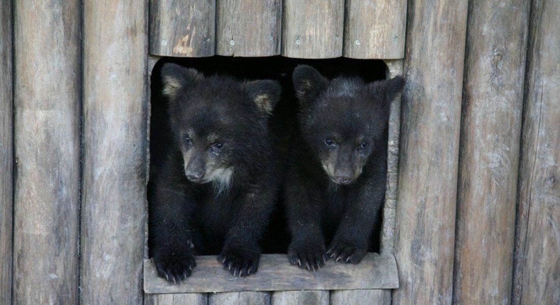 Observation des animaux au Québec