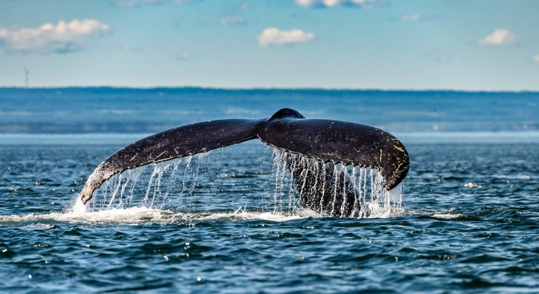 whale watching tour tadoussac
