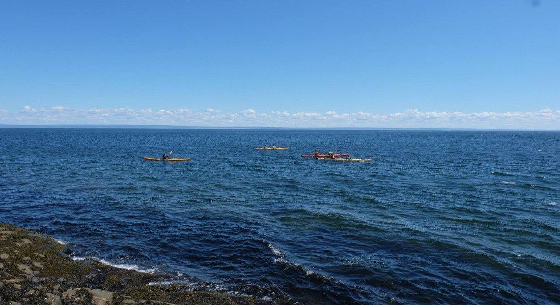 Kayak de mer pour observer les baleines