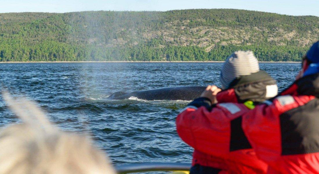 Croisière aux baleines à Tadoussac