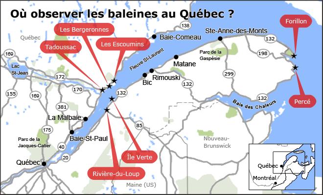 Où observer les baleines au Québec?
