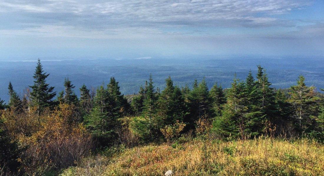 Sentier de randonnée au parc national des Monts Valin