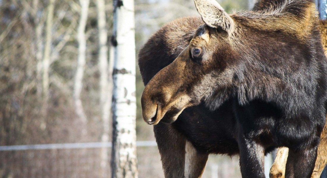 Observation de la faune au Québec
