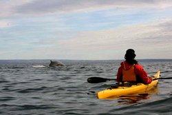 Sea kayak in Tadoussac