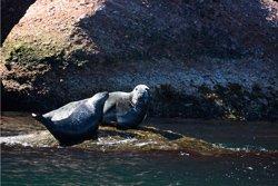 Observation des phoques, Parc du Bic