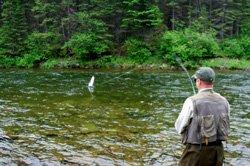 Pêche au saumon dans la rivière Matane