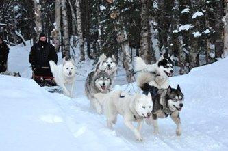 Profitez de l'hiver québécois sous toutes ses formes