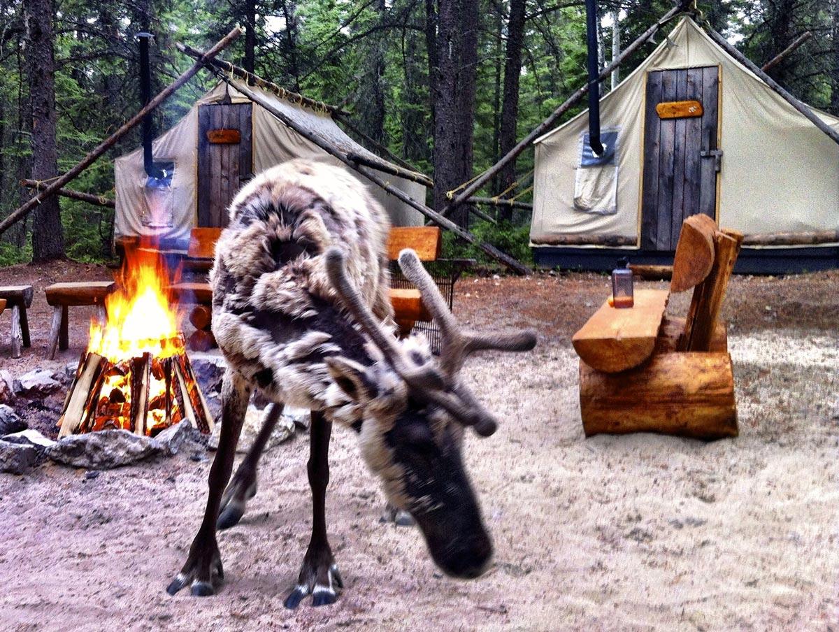 Dormir avec les caribous au Lac St-Jean