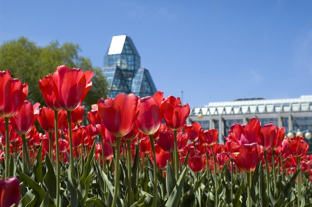 Les tulipes d'Ottawa