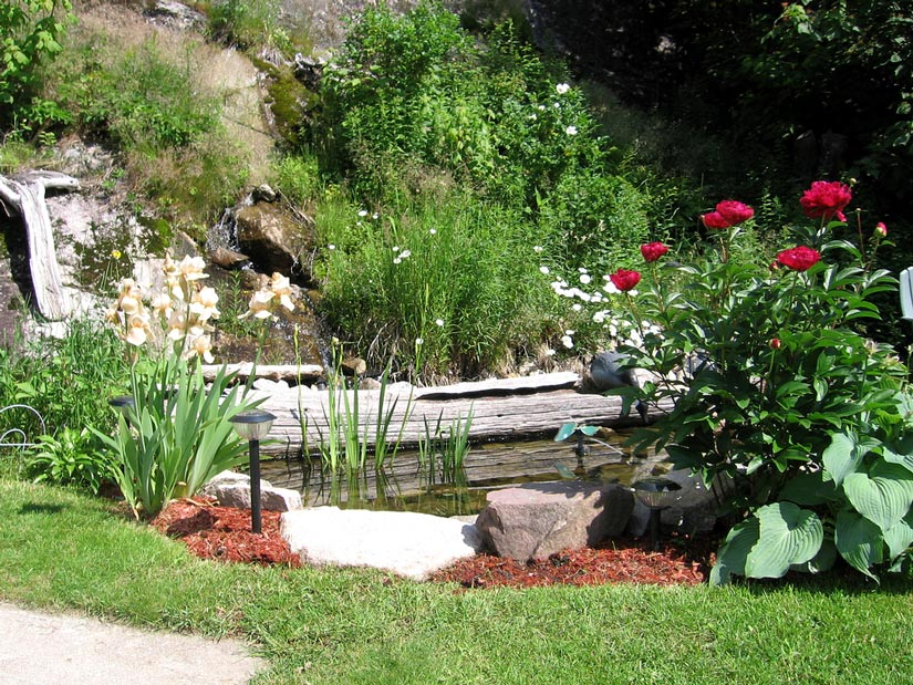 Gîte Le Roupillon - Jardin