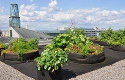 Jardin de fines herbes sur le toit