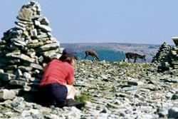 Observation de la faune - Parc Gaspésie