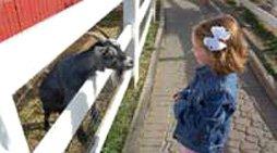 Hershey Farm - Les animaux de la ferme